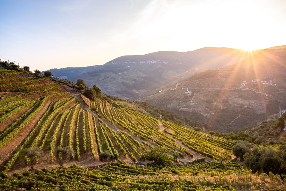 Vineyards in Douro Portugal