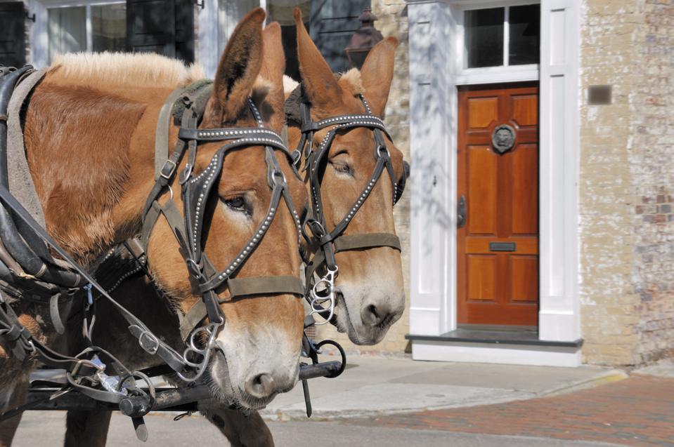 Horse-drawn carriage Charleston, South Carolina