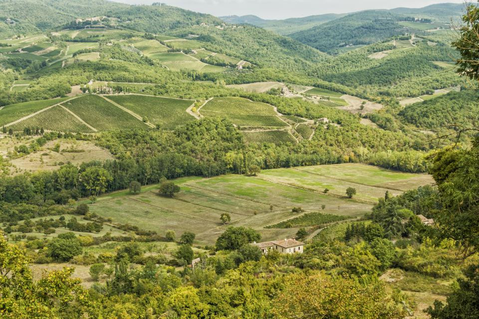 Vineyards in Albola in the Chianti wine region of northern Italy