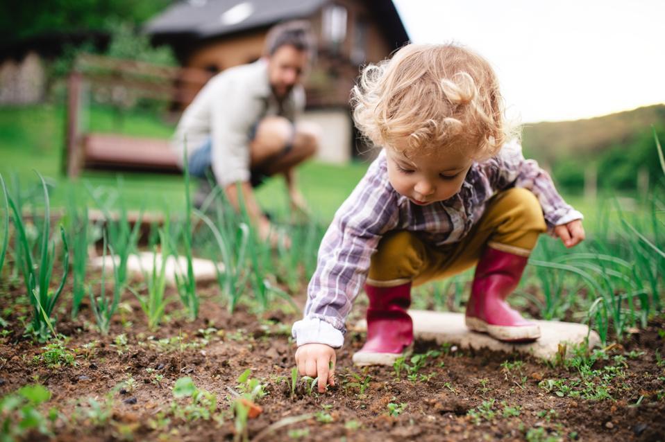 Une petite fille avec un père de jardinage méconnaissable à l'extérieur.