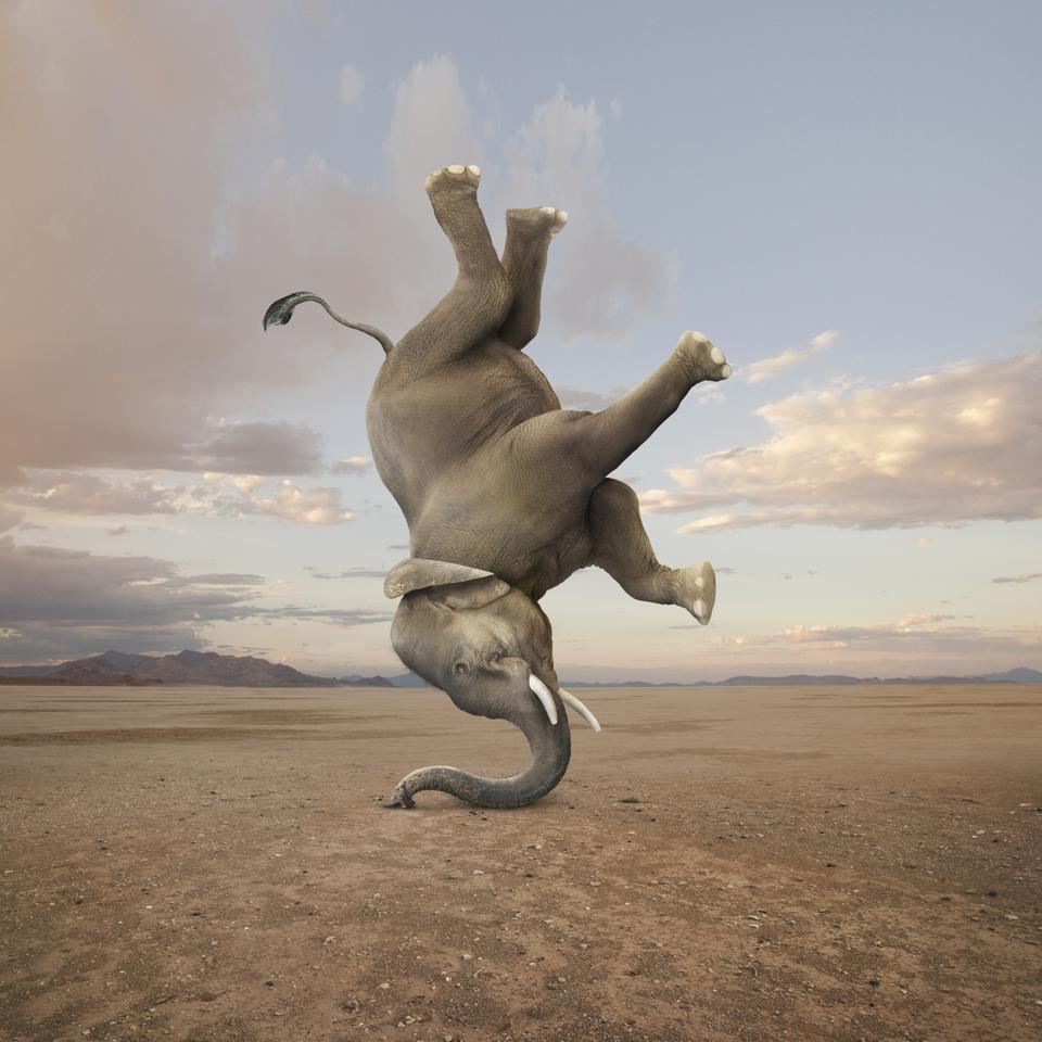 Elephant Skillfully Performing A Headstand