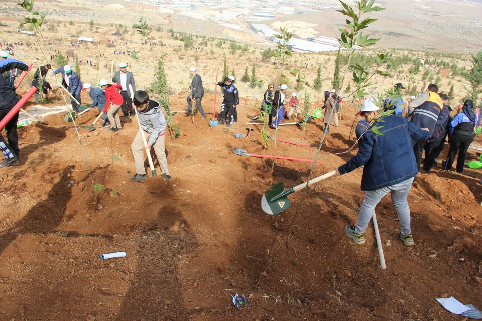 Turkey plants 11 million saplings for greener future.