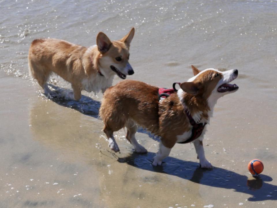 Dog Beach Day