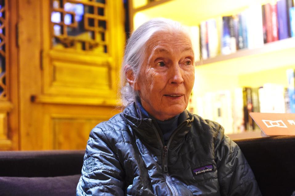 British Primatologist Jane Goodall Visits Chengdu.