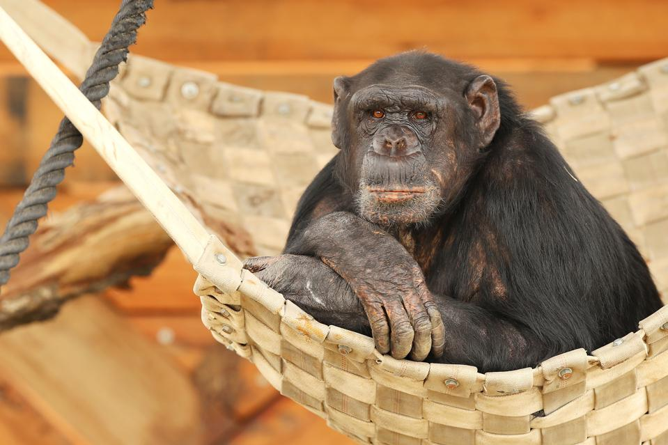 Dart-throwing monkeys might be better at forecasting than so-called experts are.