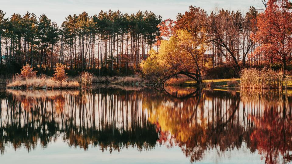 Reflections and autumn foliage around a pond in Jester Park, Iowa.
