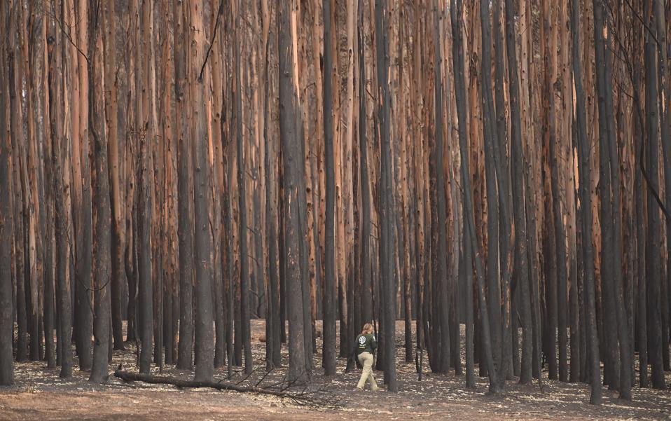 AUSTRALIA-ANIMAL-FIRE-ENVIRONMENT