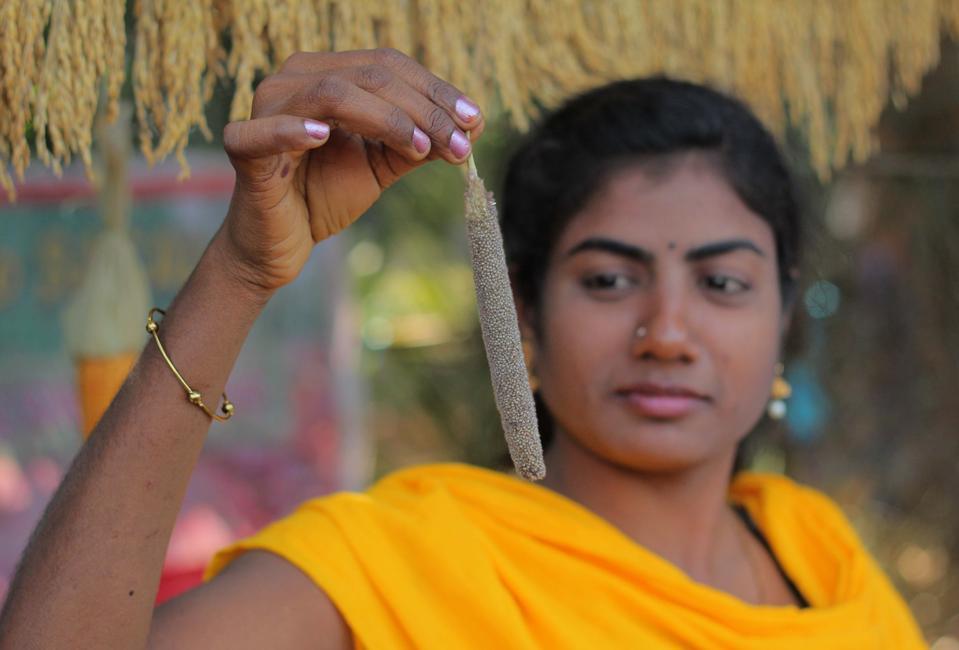 Indian Rural Life