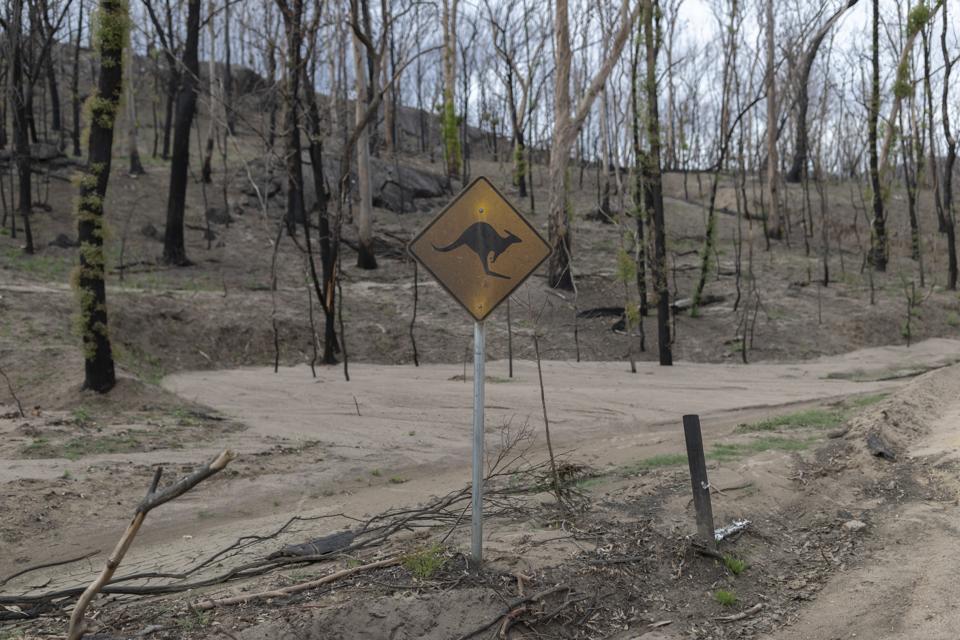 Burn out wildlife area Australia