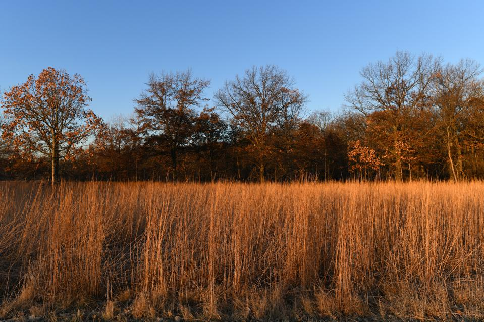 Prairie grass, Chicago