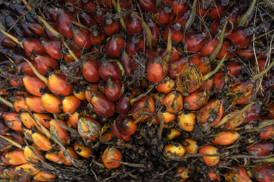 Palm oil fruits after being loaded by workers at a business shelter in Geredong Pasee.