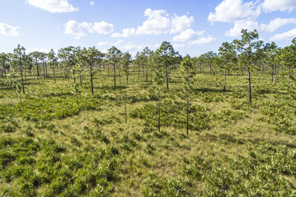 Conservation easements allow citizens tax deductions for protecting land from development