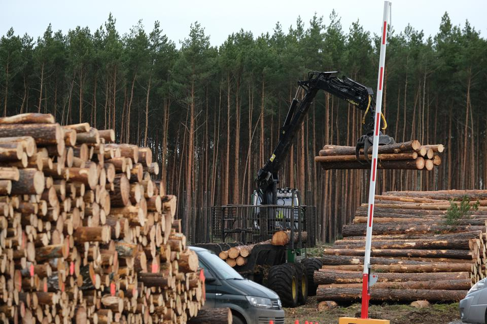 Environmentalists Seek To Block Tesla From Factory Site Deforestation