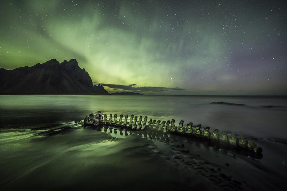 Skeleton of a beached whale under an aurora borealis (Northern Lights).
