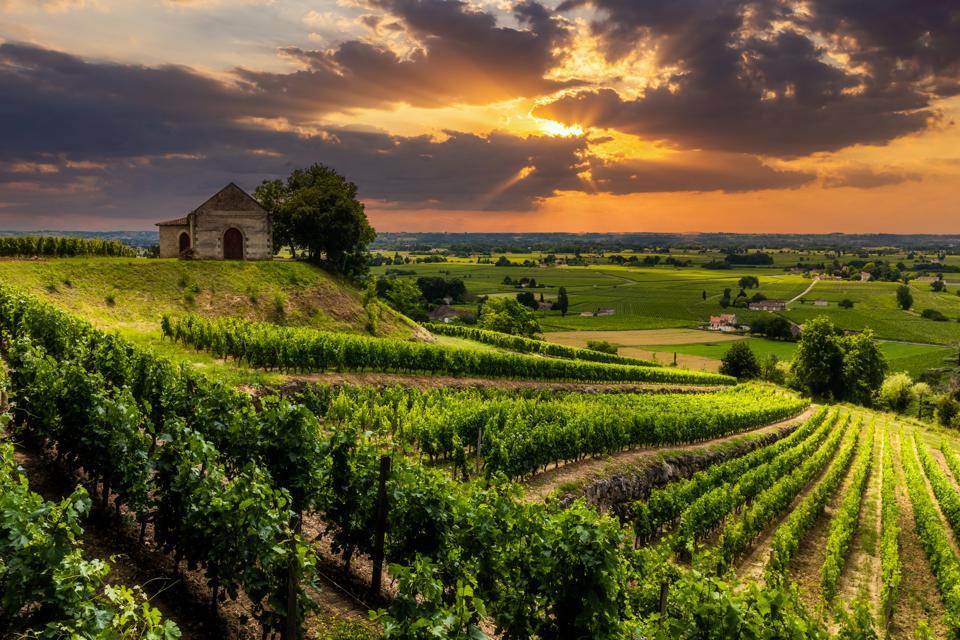 Vineyards in Saint-Émilion, Bordeaux, France at Sunset