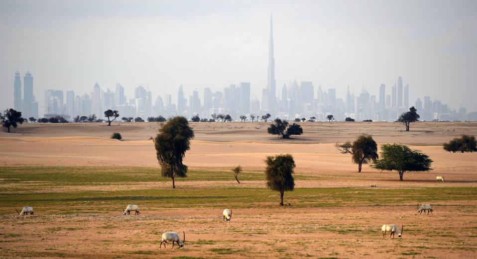Dubai & desert