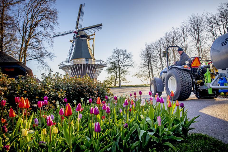 Netherlands Coronavirus Lockdown Keukenhof tulip flower garden closed