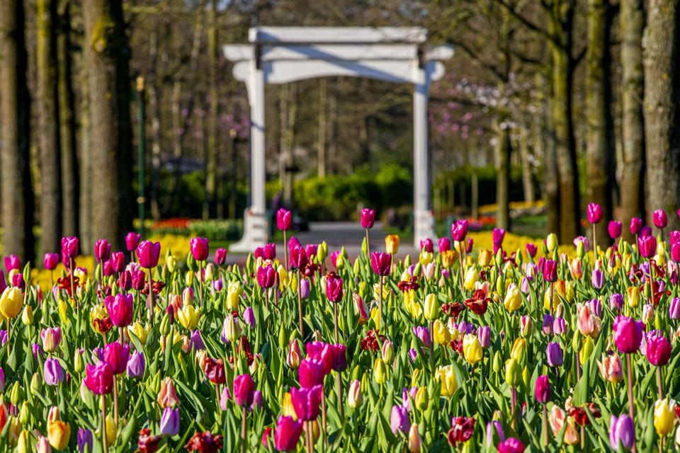 Netherlands Extends Coronavirus Lockdown Keukenhof flower gardens Holland closed