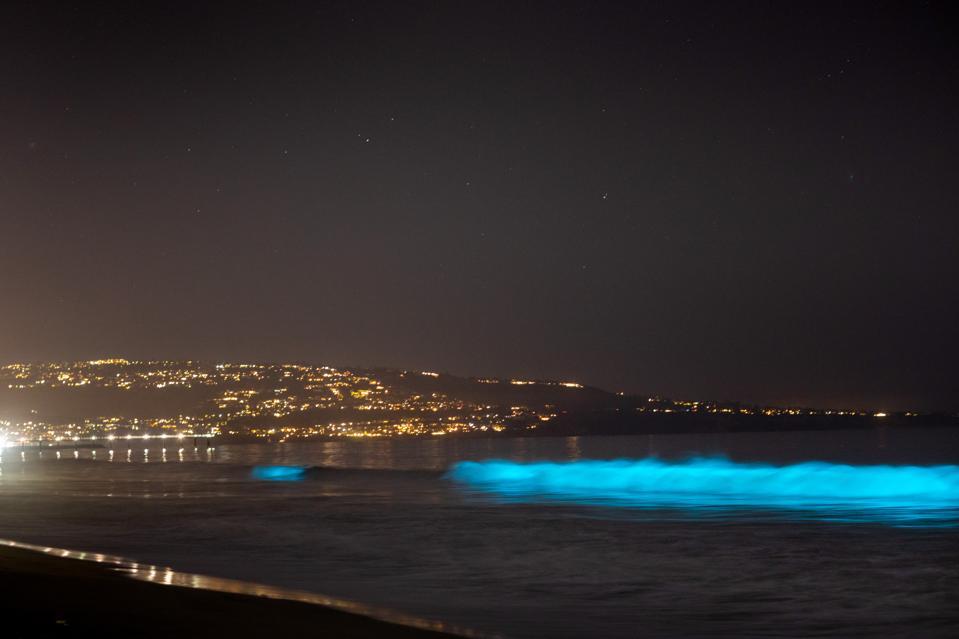 Bioluminescent waves glow off Hermosa Beach, California