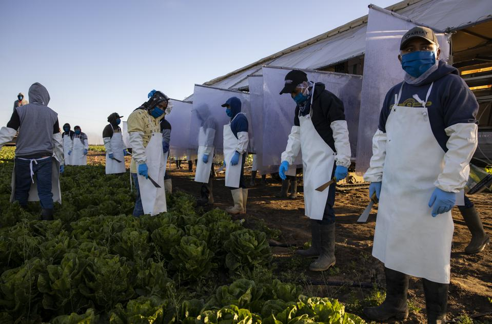 New outbreaks in fruit & vegetable production threaten farm worker health and food supply