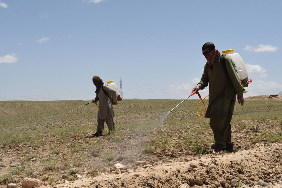 AGRICULTURE-CLIMATE-WEATHER-LOCUSTS
