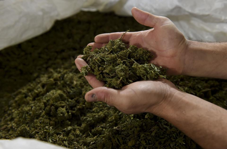 Coronavirus Changes Face Of Farming Hemp″n