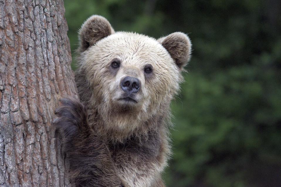 Bear Sanctuary Opens In Lviv Region
