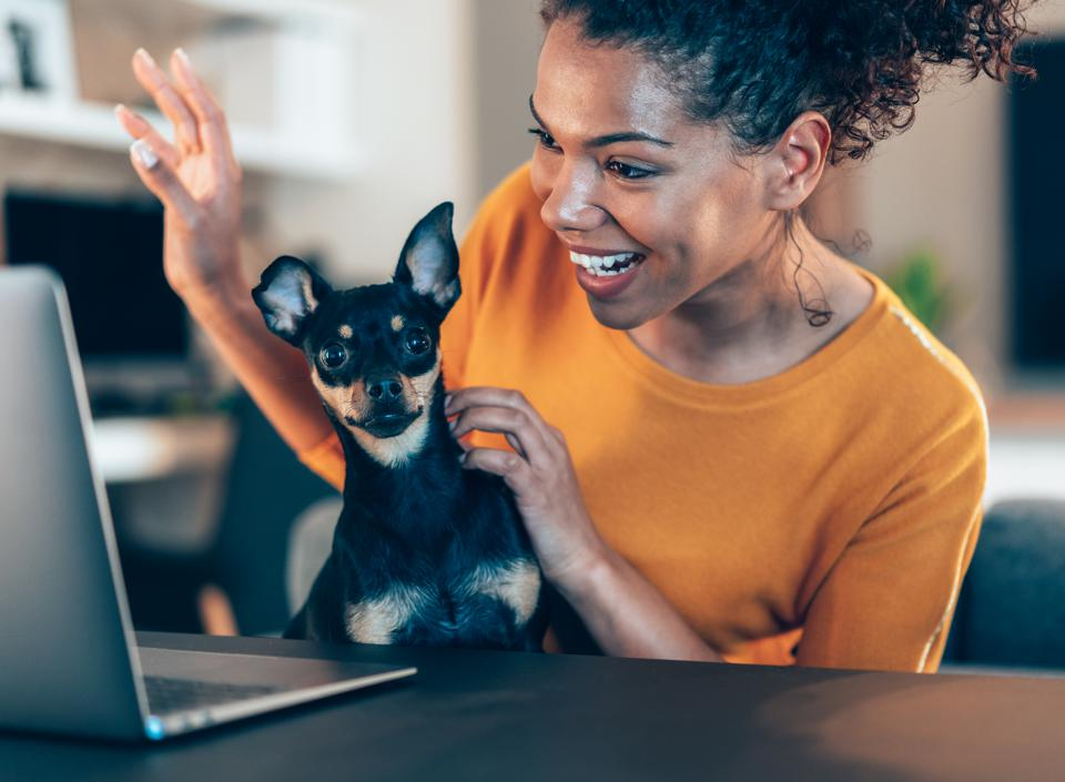 Video team call plus adorable pet while working from home