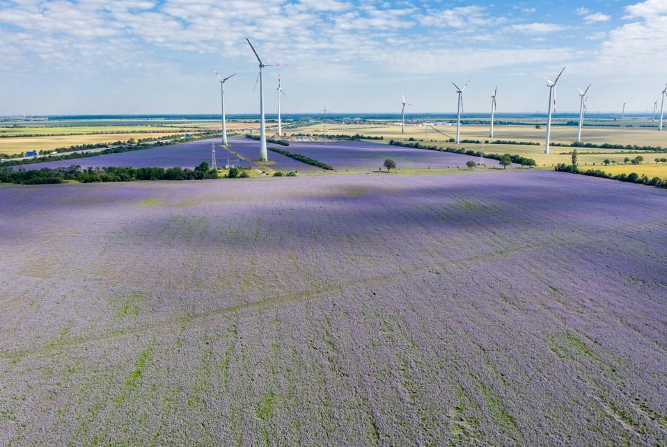 Wind Farm on Blue-violet splendour on reference fields