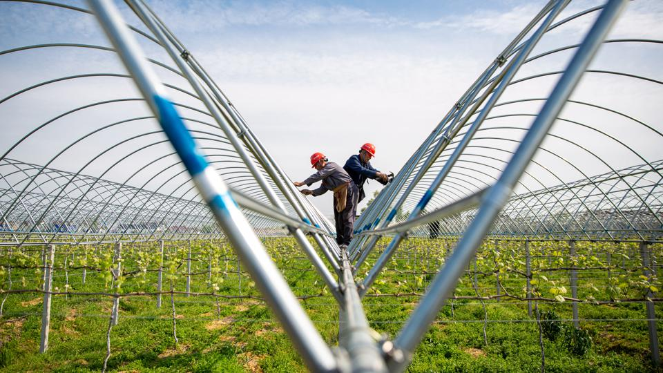 Villagers in Jiangsu Province in China build greenhouses for grape cultivation.