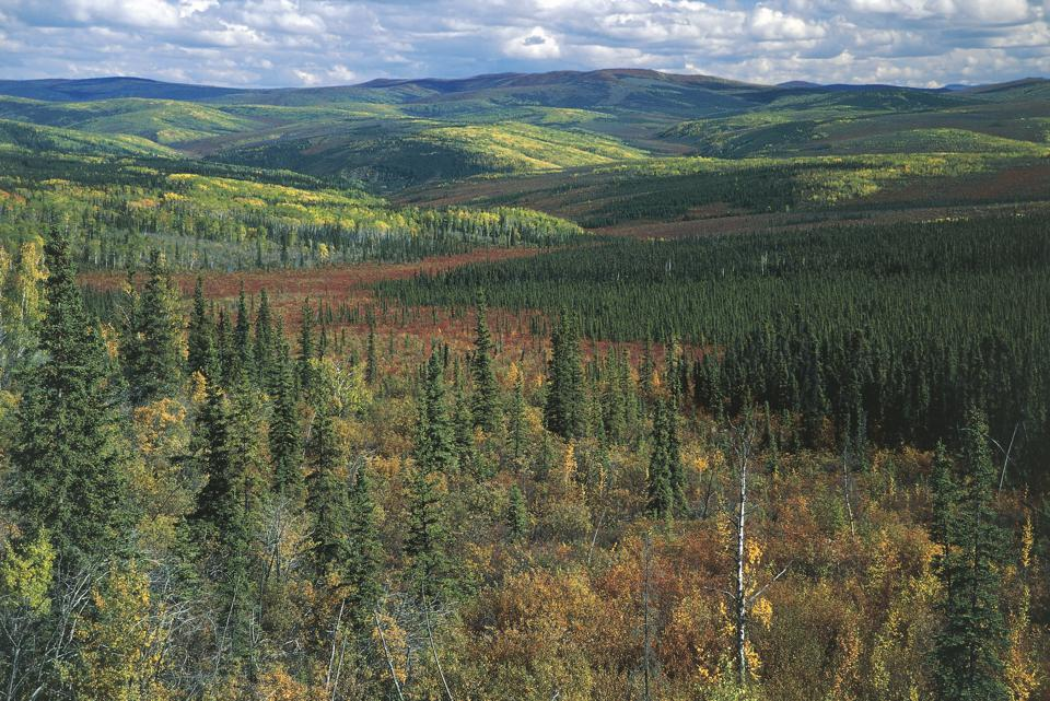USA, Alaska, boreal forest at Top of the World Highway