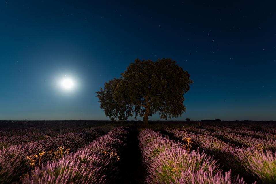 July's full moon over lavender fields in Spain.