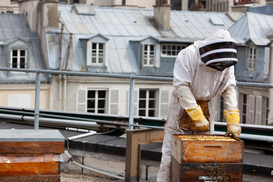 Hives On The Rooftops Of Paris