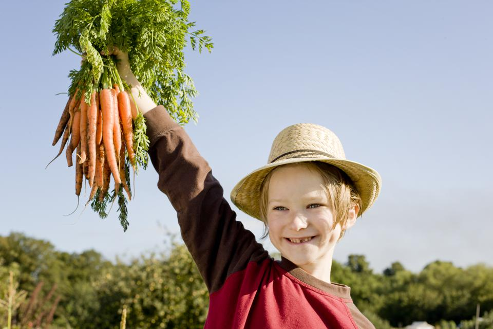 Boy wearing straw hat holding bunch of carrots, portrait