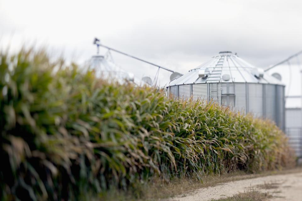 Corn field and storage bins.