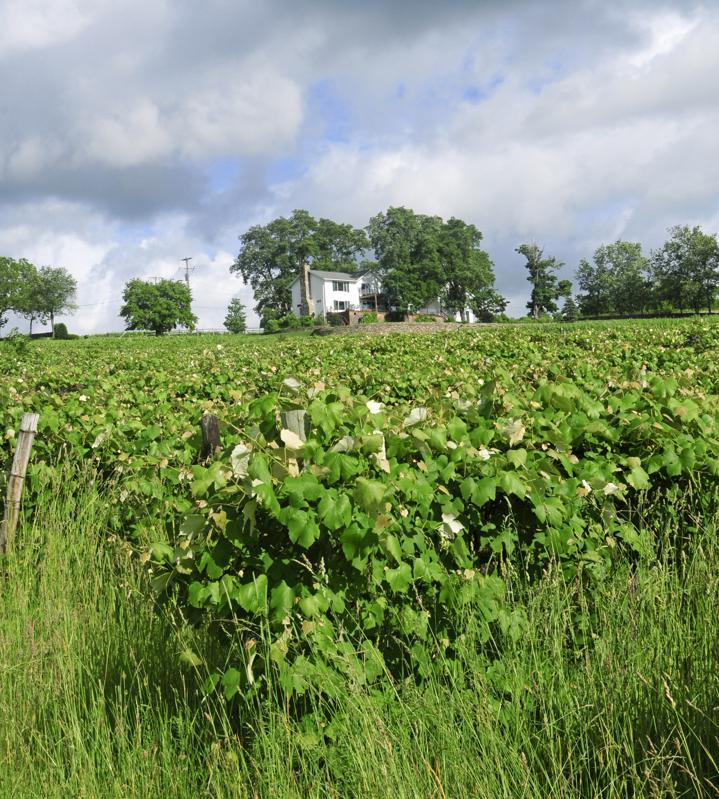 A Perspective On Climate Change In The Finger Lakes Wine Region