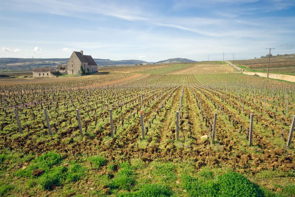 French vineyard with an old stone farm house