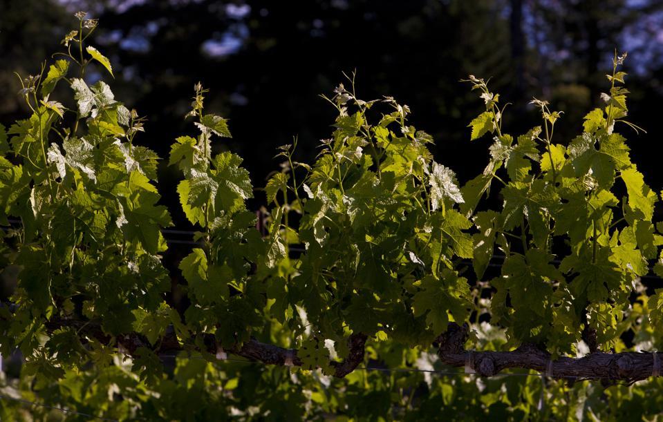 Exploring Napa Valley's Hidden Wineries
