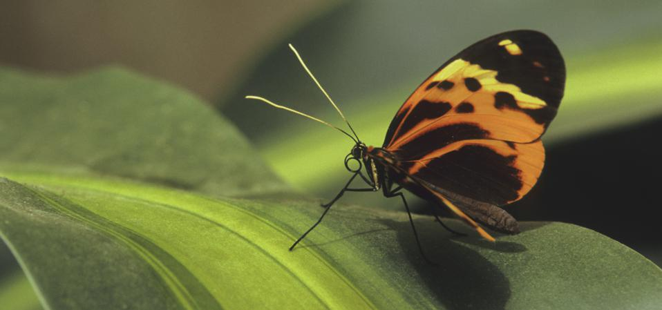 How Do You Delve Into The Secrets Of Evolution? With Butterflies!