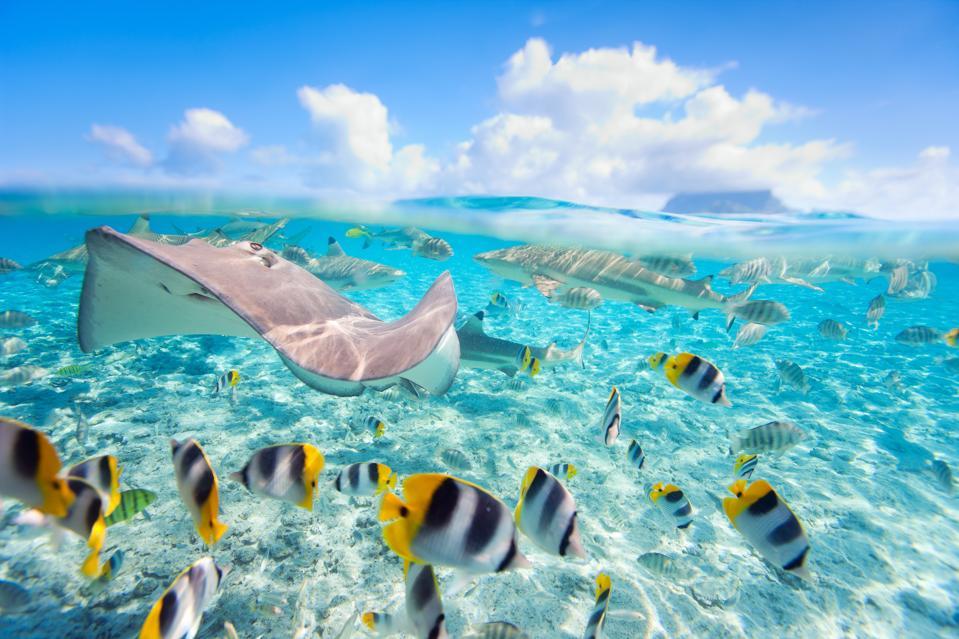 A stingray and schools of fish in BoraBora