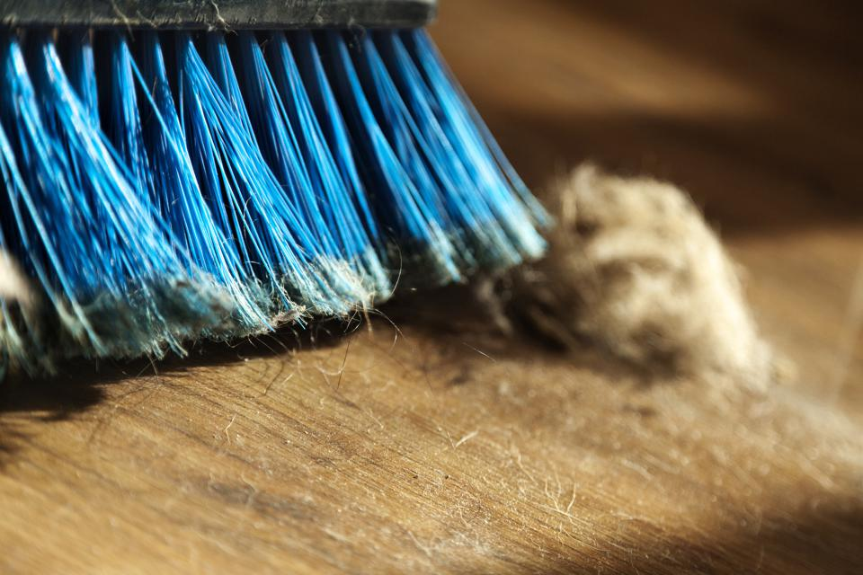 Broom, Dust and Fur Ball on Parquet Floor