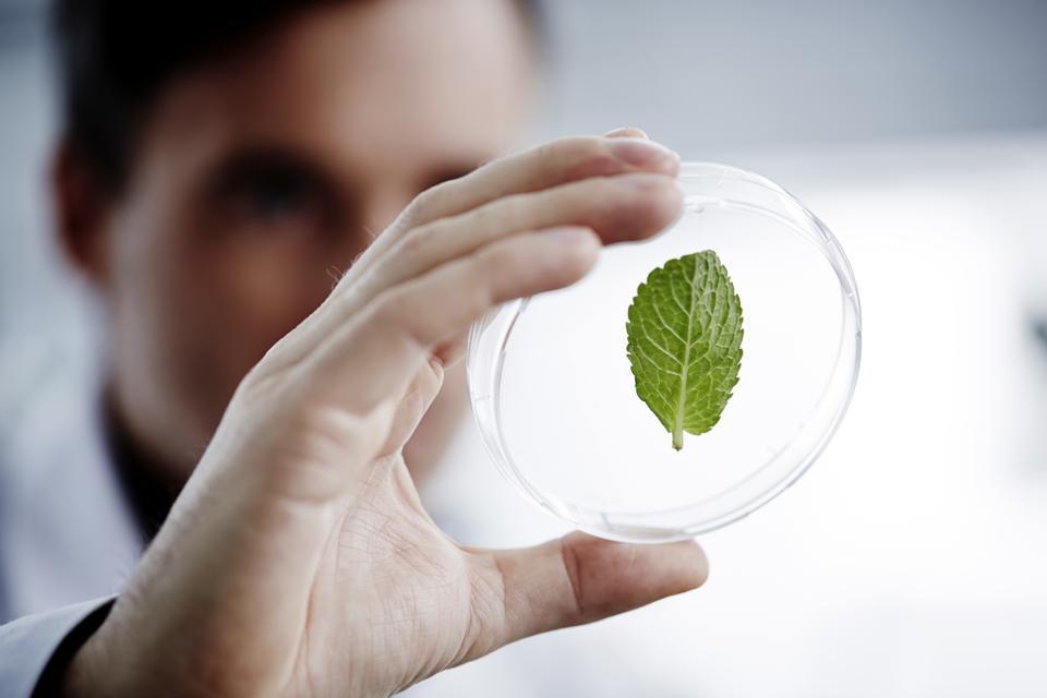 Man examining a green leaf in laboratory