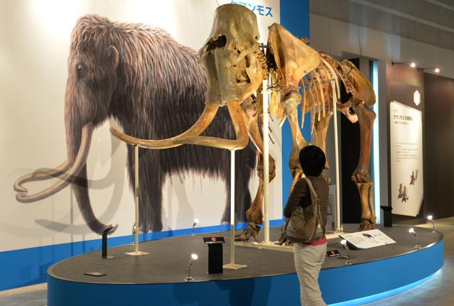 Why We Can't Clone Dinosaurs But Might Clone Mammoths