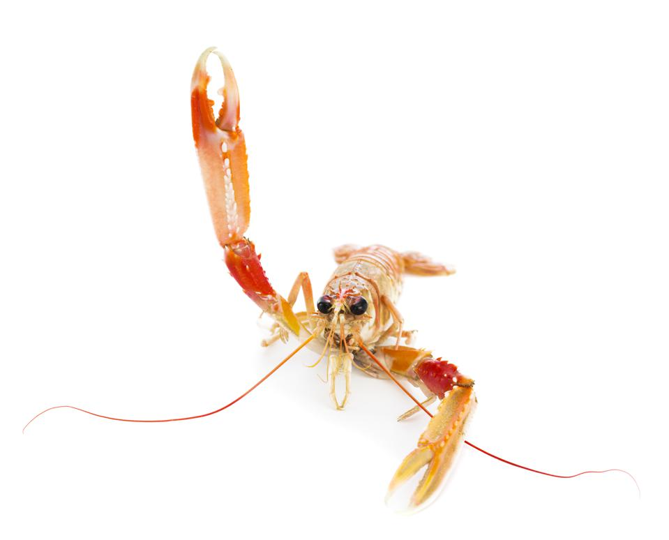 A Norway lobster, also known as a Dublin Bay Prawn, is considered to be the most important commercial crustacean in Europe.