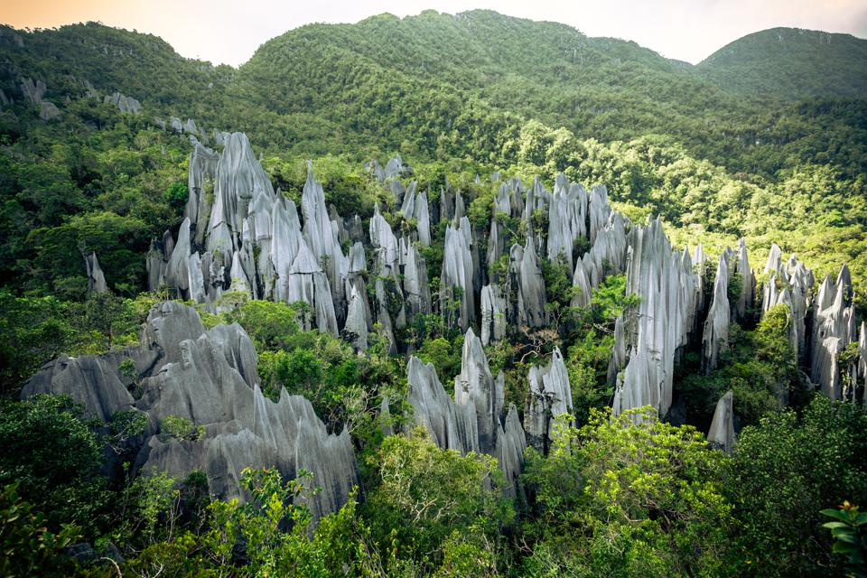 The Pinnacles Rock Formation at Gunung Mulu National Park