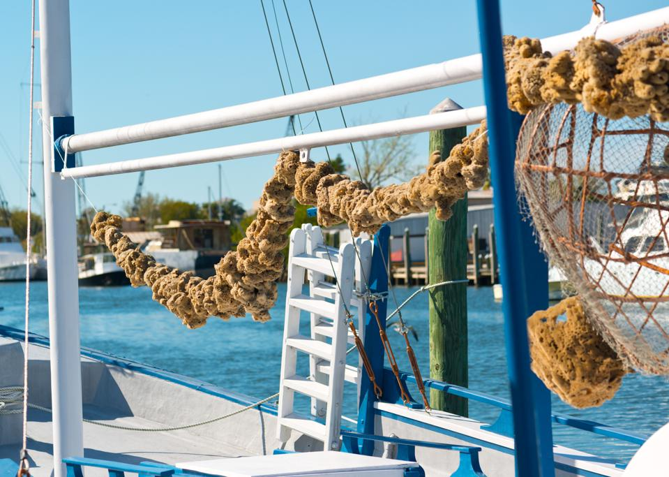 Sponges hanging from ship
