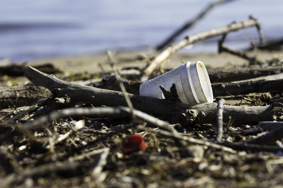 Litter by the Lake