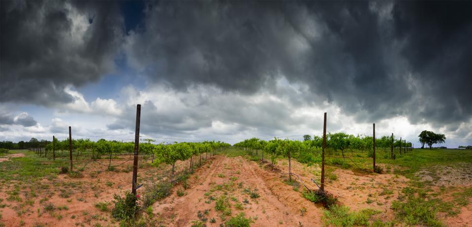 Texas Hill Country Vineyard