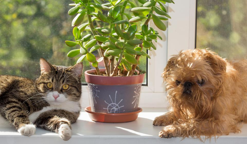 Cat and dog sitting with plant on window sill.