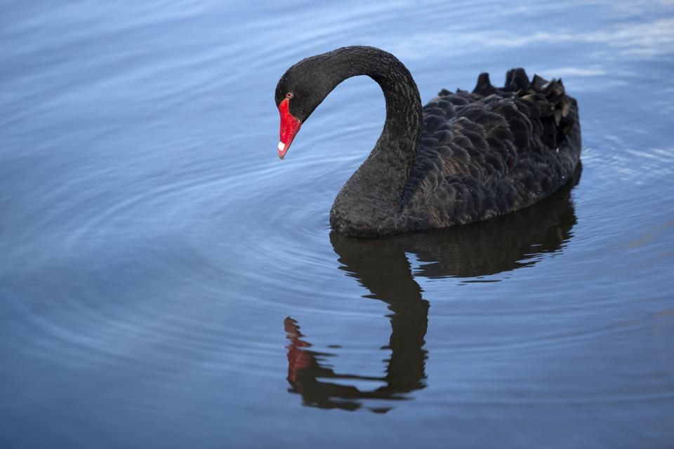 Black Swans Started The Selloff, Now Economic Gravity Will Finish It